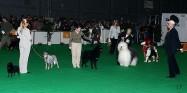 XVIII. Mezinárodní výstava psů PRAHA 2009 fotogalerie č.63