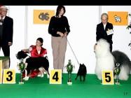 XVIII. Mezinárodní výstava psů PRAHA 2009 fotogalerie č.66