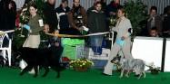 XVIII. Mezinárodní výstava psů PRAHA 2009 fotogalerie č.67