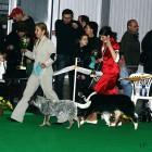 XVIII. Mezinárodní výstava psů PRAHA 2009 fotogalerie č.68