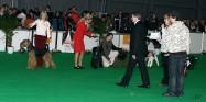 XVIII. Mezinárodní výstava psů PRAHA 2009 fotogalerie č.69