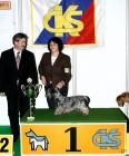 XVIII. Mezinárodní výstava psů PRAHA 2009 fotogalerie č.70