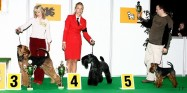 XVIII. Mezinárodní výstava psů PRAHA 2009 fotogalerie č.71