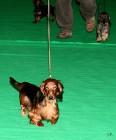 XVIII. Mezinárodní výstava psů PRAHA 2009 fotogalerie č.72