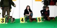 XVIII. Mezinárodní výstava psů PRAHA 2009 fotogalerie č.75