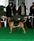 XVIII. Mezinárodní výstava psů PRAHA 2009 fotogalerie č.76