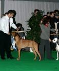 XVIII. Mezinárodní výstava psů PRAHA 2009 fotogalerie č.78
