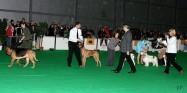 XVIII. Mezinárodní výstava psů PRAHA 2009 fotogalerie č.80