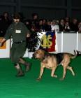 XVIII. Mezinárodní výstava psů PRAHA 2009 fotogalerie č.81