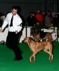 XVIII. Mezinárodní výstava psů PRAHA 2009 fotogalerie č.82