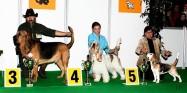 XVIII. Mezinárodní výstava psů PRAHA 2009 fotogalerie č.84