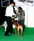 XVIII. Mezinárodní výstava psů PRAHA 2009 fotogalerie č.85