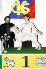 XVIII. Mezinárodní výstava psů PRAHA 2009 fotogalerie č.89