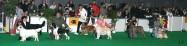 XVIII. Mezinárodní výstava psů PRAHA 2009 fotogalerie č.94
