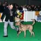 XVIII. Mezinárodní výstava psů PRAHA 2009 fotogalerie č.95