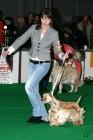 XVIII. Mezinárodní výstava psů PRAHA 2009 fotogalerie č.96