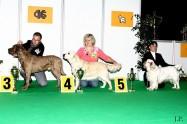 XVIII. Mezinárodní výstava psů PRAHA 2009 fotogalerie č.98