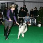 XVIII. Mezinárodní výstava psů PRAHA 2009 fotogalerie č.100