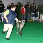 XVIII. Mezinárodní výstava psů PRAHA 2009 fotogalerie č.101