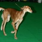 XVIII. Mezinárodní výstava psů PRAHA 2009 fotogalerie č.102
