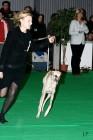 XVIII. Mezinárodní výstava psů PRAHA 2009 fotogalerie č.103