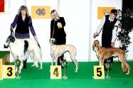 XVIII. Mezinárodní výstava psů PRAHA 2009 fotogalerie č.106