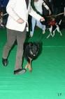 XVIII. Mezinárodní výstava psů PRAHA 2009 fotogalerie č.108