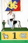 XVIII. Mezinárodní výstava psů PRAHA 2009 fotogalerie č.110