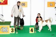 XVIII. Mezinárodní výstava psů PRAHA 2009 fotogalerie č.111