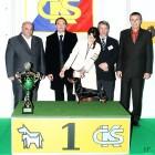 XVIII. Mezinárodní výstava psů PRAHA 2009 fotogalerie č.115