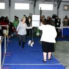 XVIII. Mezinárodní výstava psů PRAHA 2009 fotogalerie č.125