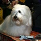 XVIII. Mezinárodní výstava psů PRAHA 2009 fotogalerie č.129