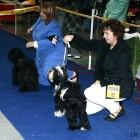 XVIII. Mezinárodní výstava psů PRAHA 2009 fotogalerie č.135