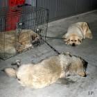 XVIII. Mezinárodní výstava psů PRAHA 2009 fotogalerie č.138