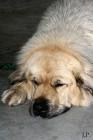 XVIII. Mezinárodní výstava psů PRAHA 2009 fotogalerie č.140