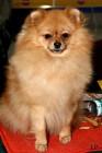 XVIII. Mezinárodní výstava psů PRAHA 2009 fotogalerie č.141