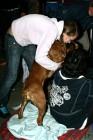 XVIII. Mezinárodní výstava psů PRAHA 2009 fotogalerie č.152