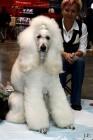 XVIII. Mezinárodní výstava psů PRAHA 2009 fotogalerie č.156