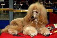 XVIII. Mezinárodní výstava psů PRAHA 2009 fotogalerie č.158