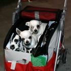 XVIII. Mezinárodní výstava psů PRAHA 2009 fotogalerie č.160