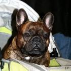 XVIII. Mezinárodní výstava psů PRAHA 2009 fotogalerie č.166