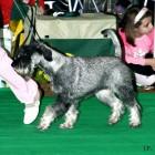 XVIII. Mezinárodní výstava psů PRAHA 2009 fotogalerie č.180