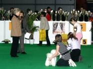 XVIII. Mezinárodní výstava psů PRAHA 2009 fotogalerie č.182