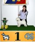 XVIII. Mezinárodní výstava psů PRAHA 2009 fotogalerie č.183