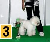 XVIII. Mezinárodní výstava psů PRAHA 2009 fotogalerie č.184