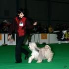 XVIII. Mezinárodní výstava psů PRAHA 2009 fotogalerie č.186