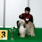 XVIII. Mezinárodní výstava psů PRAHA 2009 fotogalerie č.188