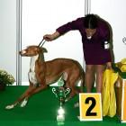 XVIII. Mezinárodní výstava psů PRAHA 2009 fotogalerie č.189