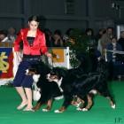 XVIII. Mezinárodní výstava psů PRAHA 2009 fotogalerie č.190