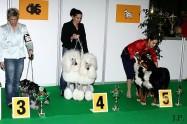 XVIII. Mezinárodní výstava psů PRAHA 2009 fotogalerie č.191